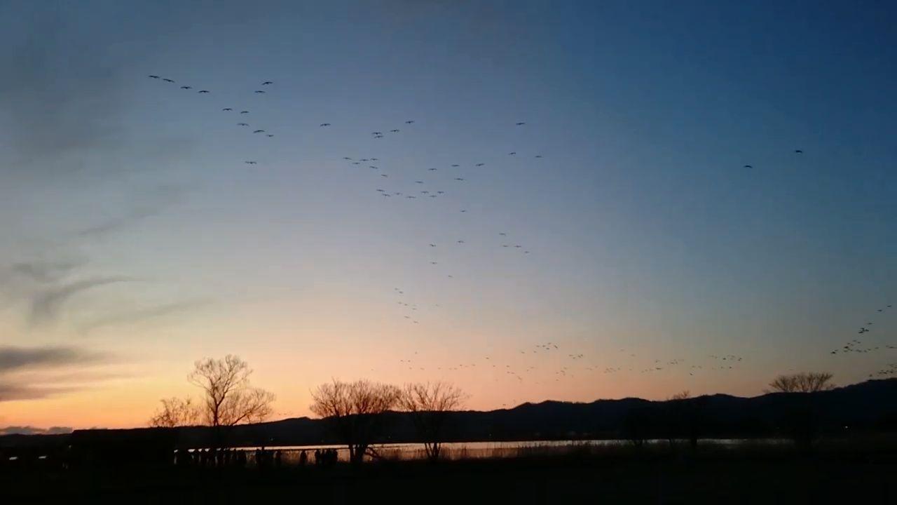 北海道宮島沼の真雁